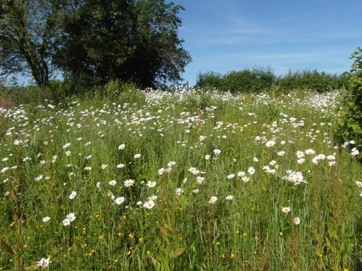 meadow-shop